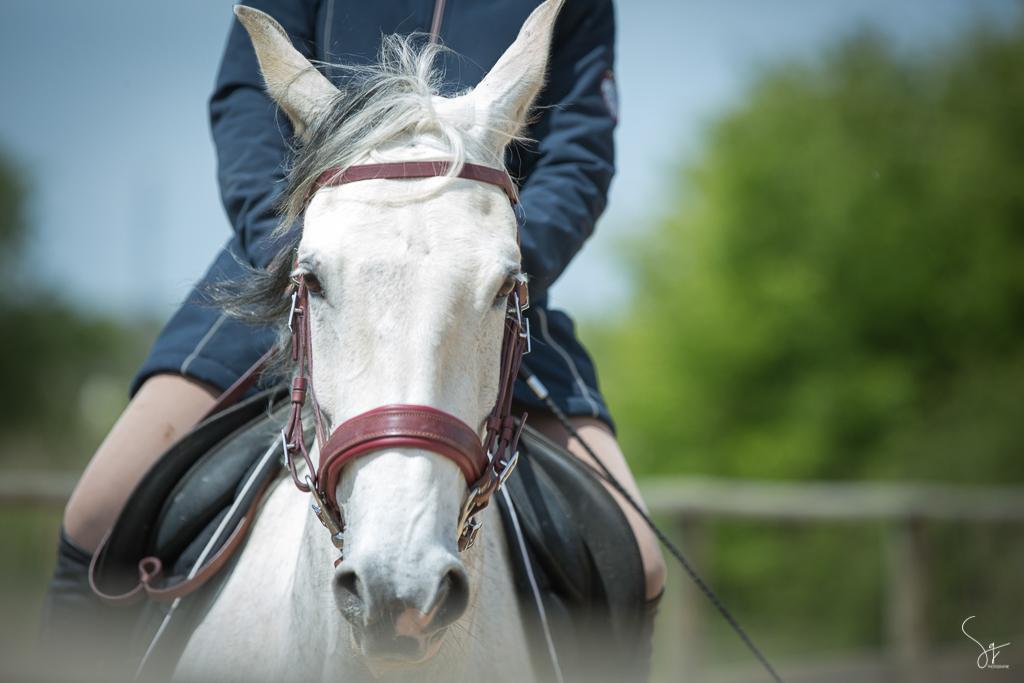 Equitation, cheval blanc, portrait, Vic, St Jean de Monts